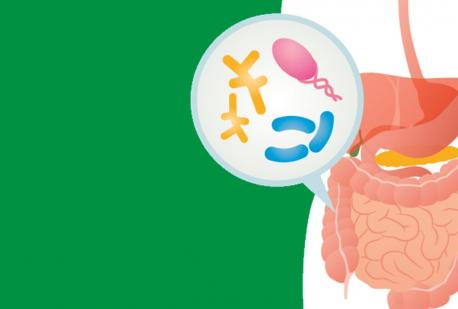 """""""MICROBIOTA, NEURO-INFIAMMAZIONE E SECONDO CERVELLO: Update e supporto nutrizionale"""""""